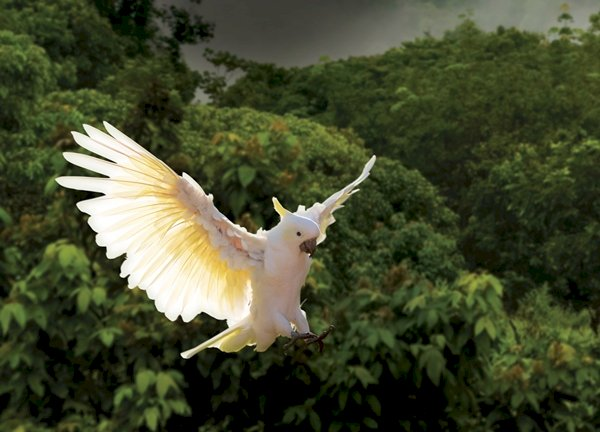 EsselWorld Bird Park's Celebirdy LIVE is back with season 2!