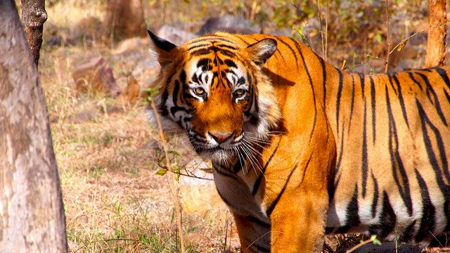 "Madhya Pradesh Tourism Kicks-off ""Tigress on the Trail"""