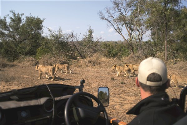 South African Tourism Announces Maiden Virtual Roadshow in October '21